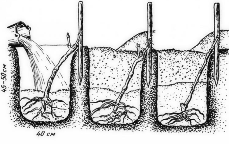 Www выращивание огурцов 59