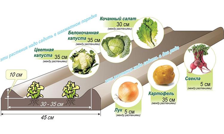 На каком расстоянии лучше сажать картошку 68