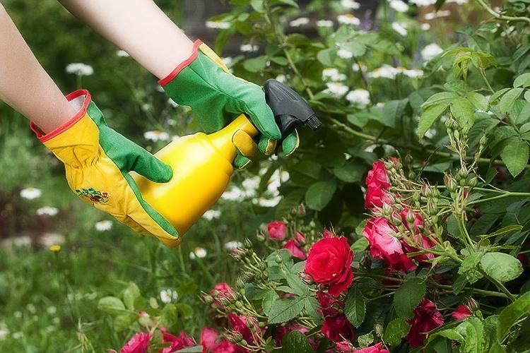Как подготовить и укрыть розы на зиму: правила и рекомендации