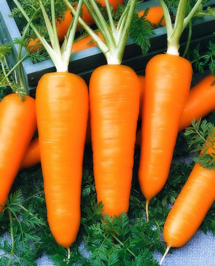 Как посадить морковь под зиму и преимущества подзимнего посева