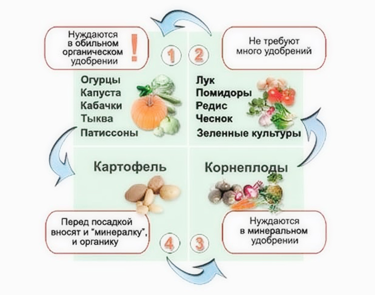 Как сажать чеснок под зиму: советы опытных садоводов