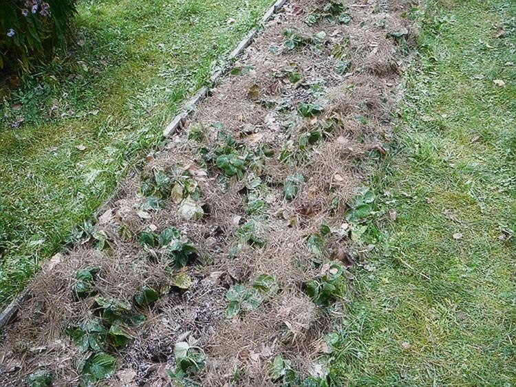 Как укрыть клубнику на зиму: подготовка растений и выбор материала