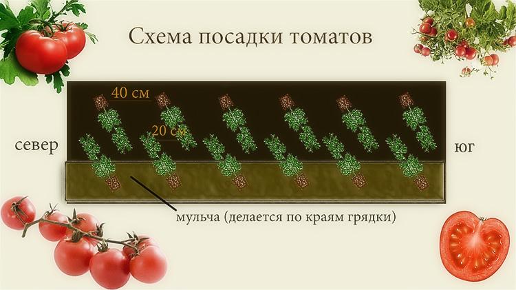 Посадка помидор в грунт