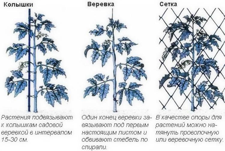 Как выращивать томаты в открытом грунте