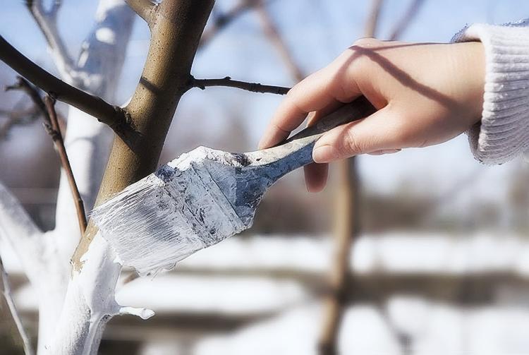Когда и как укрыть молодую яблоню на зиму