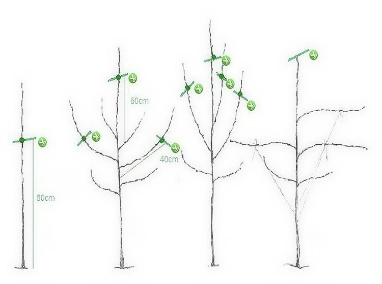 Обрезка яблони осенью увеличивает урожай на следующий год