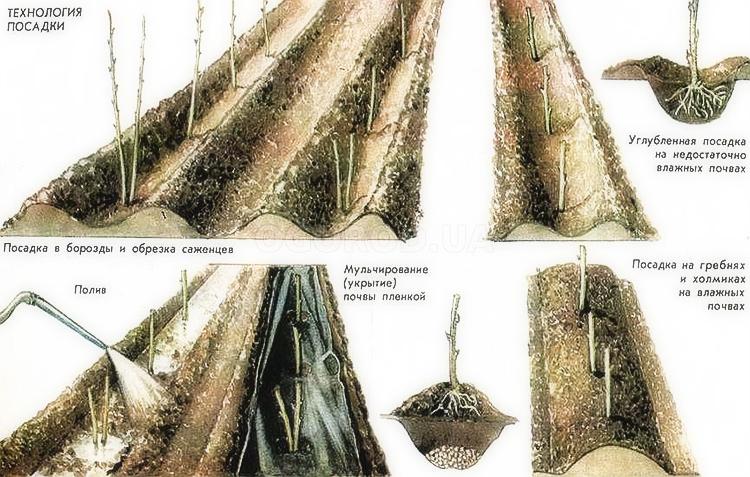 Пересадка малины осенью на новое место: основные методы и уход