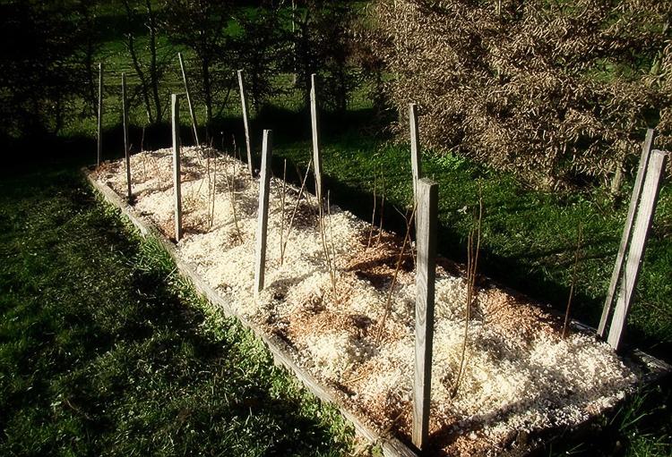 Правильная посадка малины осенью: выбор места и саженцев, уход