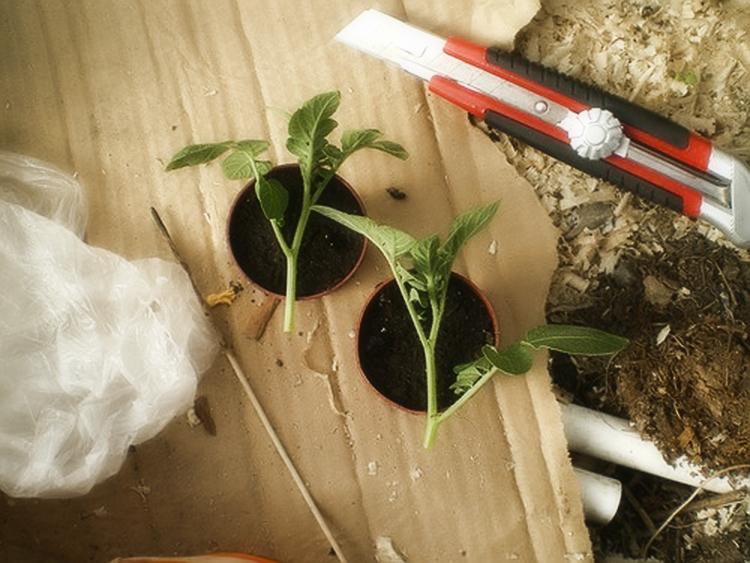Способы размножения картофеля: описание методов и преимущества