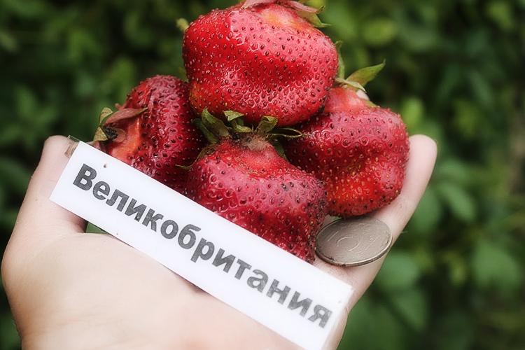 Способы выращивания крупной и сладкой клубники