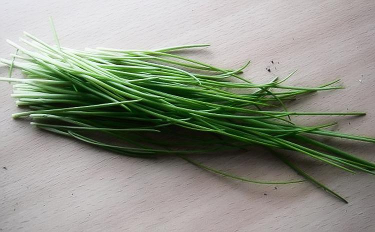 Выращивание лука в открытом грунте: посадка, уход, уборка