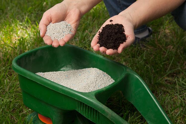 Посадка и выращивание боярышника на дачном участке