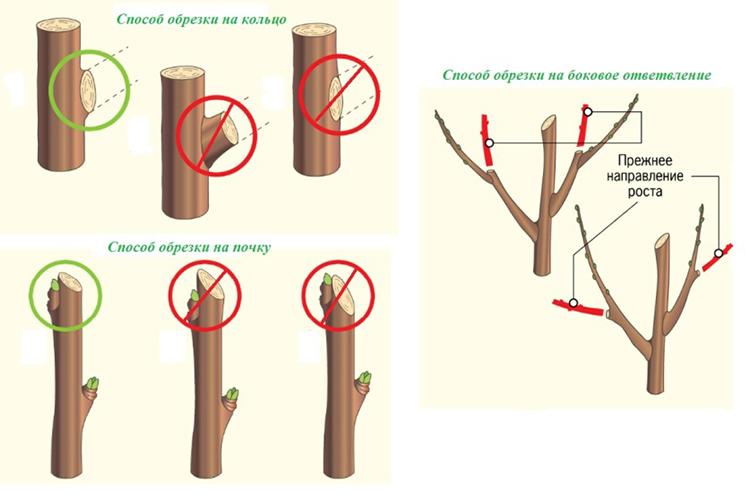 Весенняя обрезка садовых яблонь: сроки проведения и способы