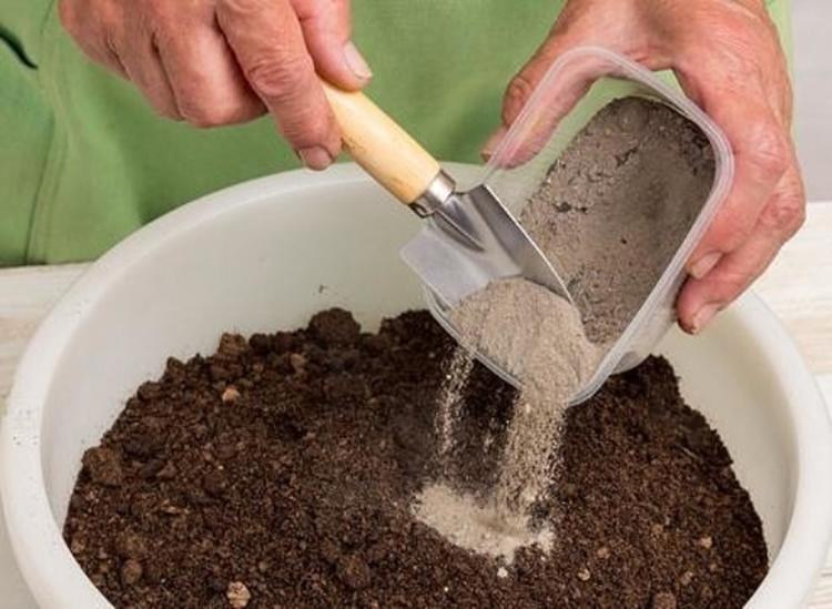 Выращивание рассады ранней капусты в парниках