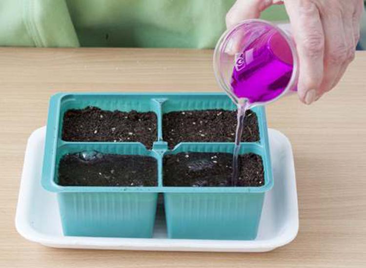 Выращивание белокочанной капусты на участке