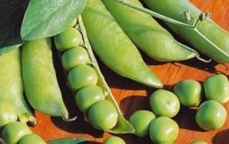 Выращивание гороха: выбор сорта, посев, уход
