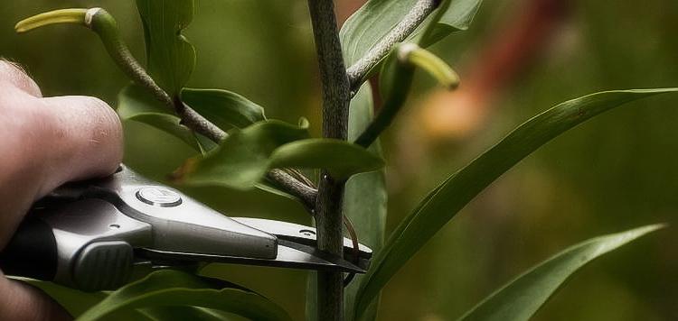 Выращивание лилий в открытом грунте: правила и советы