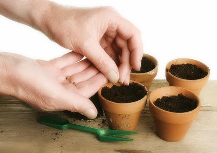 Выращивание огурцов в открытом грунте: правила и рекомендации