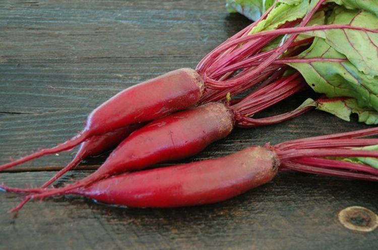 Выращивание свеклы: секреты опытных огородников