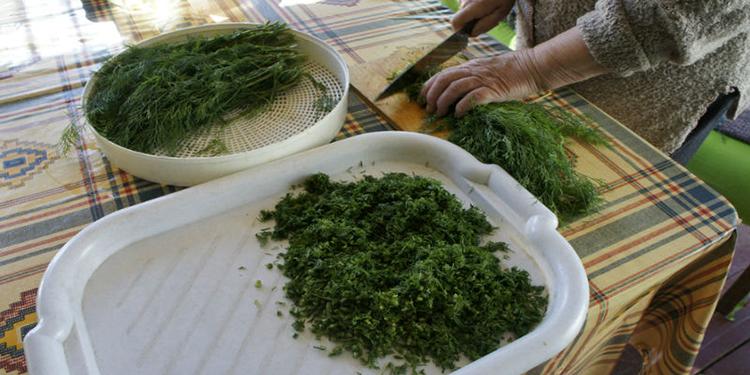 Выращивание укропа: в открытом грунте, теплице и дома