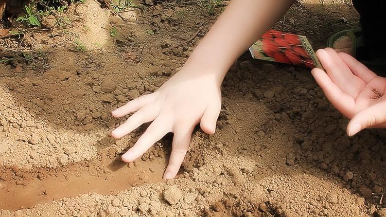 Выращивание редиса в открытом грунте: советы и рекомендации