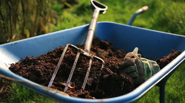 Выращивание жимолости – сорта, посадка и правила ухода